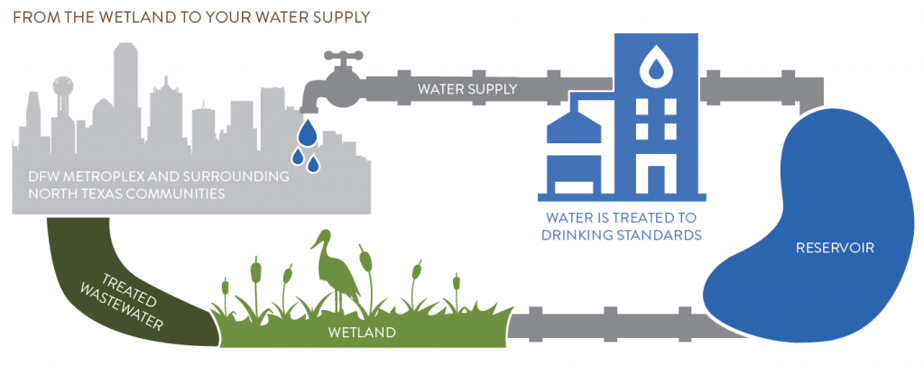 Constructed wetlands explanation graphic