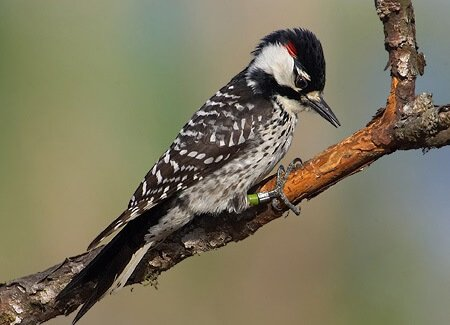 Longleaf Ridge wildlife