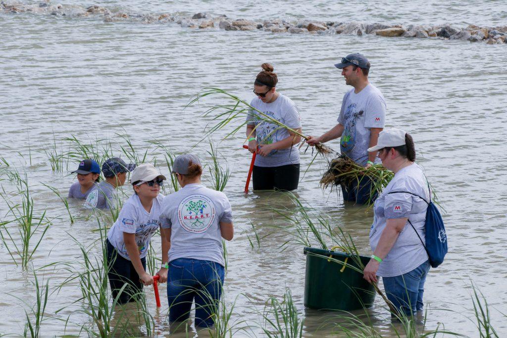 Marathon volunteers working with habitat