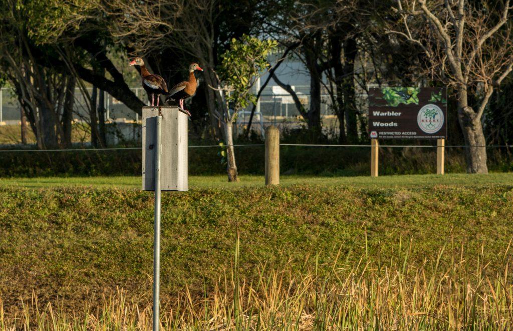 Habitat for ducks at Marathon