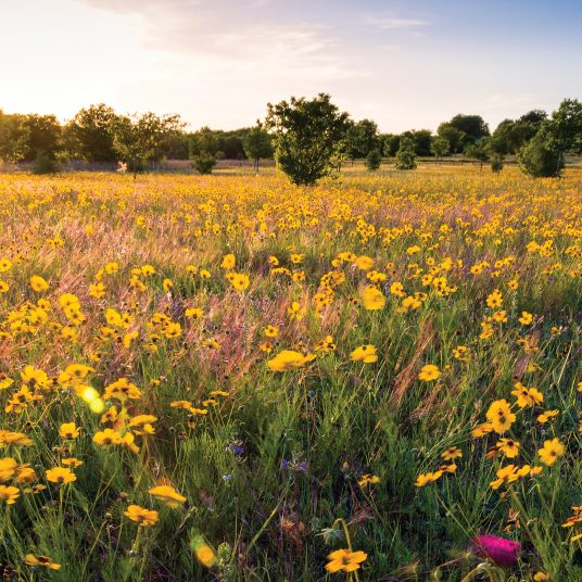 rights-of-way pollinator habitat