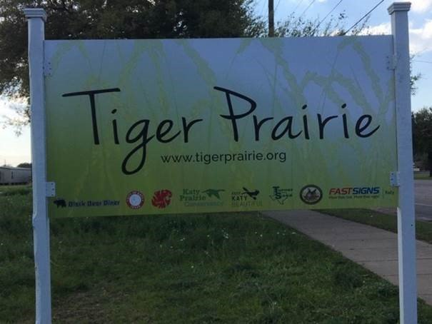 Katy High School Native Prairie Project, Tiger Prairie
