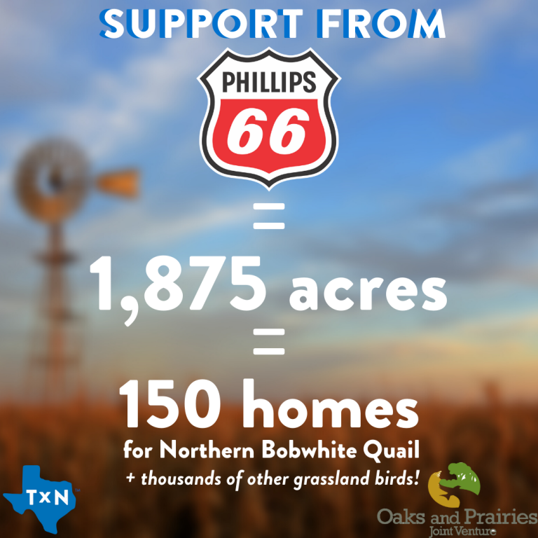 Phillips 66 partners with OPJV and Texan by Nature to impact grasslands