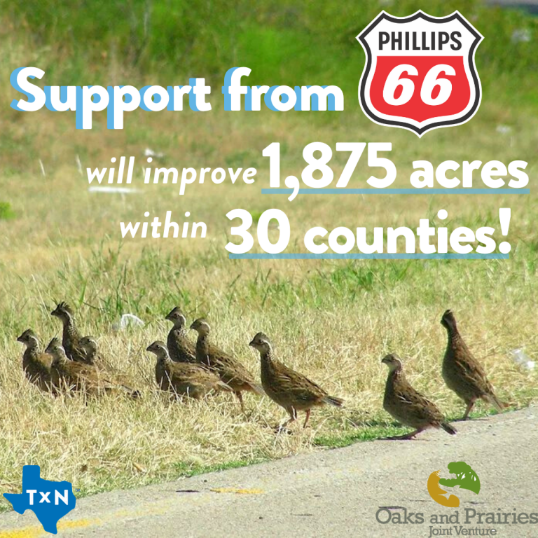 Phillips 66 partners with Texan by Nature and OPJV to impact grasslands
