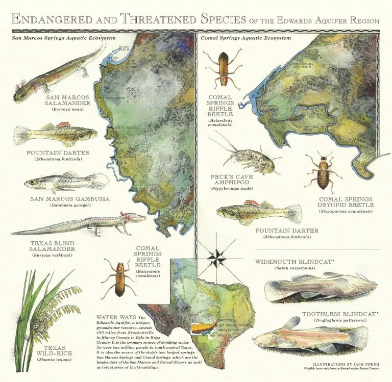 Endangered and threatened species of the Edwards Aquifer region