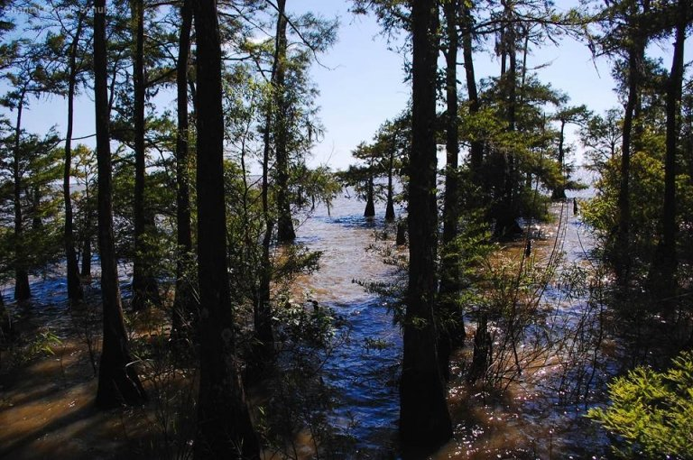 Anahuac National Wildlife Refuge's wetlands