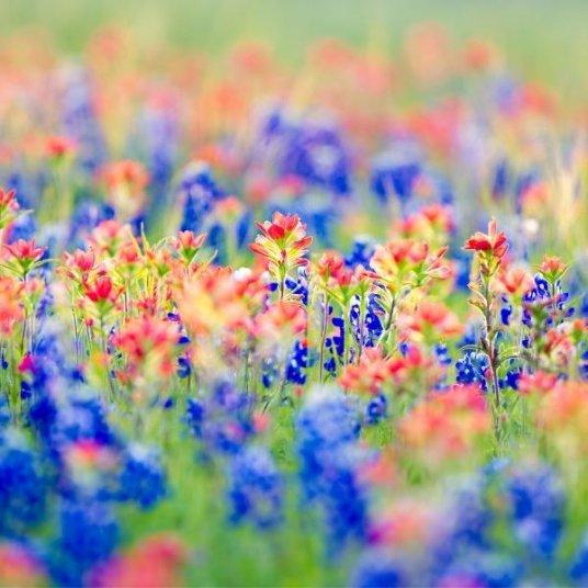 Scenic Texas Wildflowers