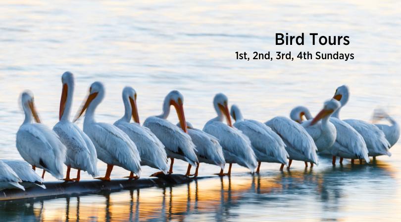 Mitchell Lake Audubon Center, San Antonio - Guided Bird Tours