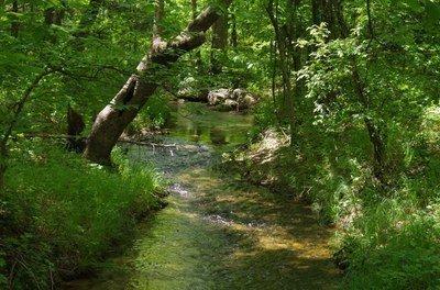 Texas Waters Webinar: Aquatic Vegetation Management