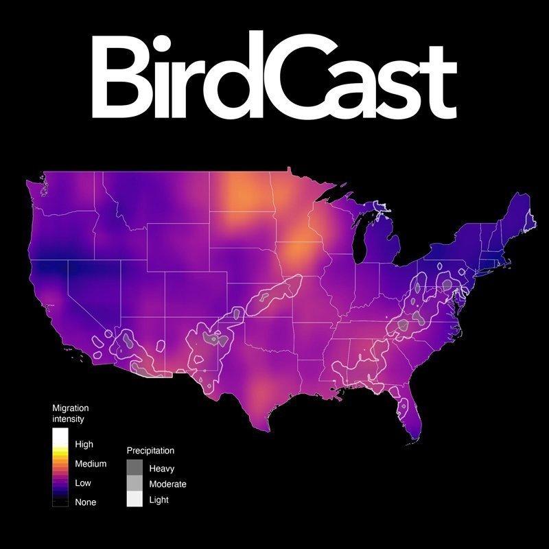 Birdcast