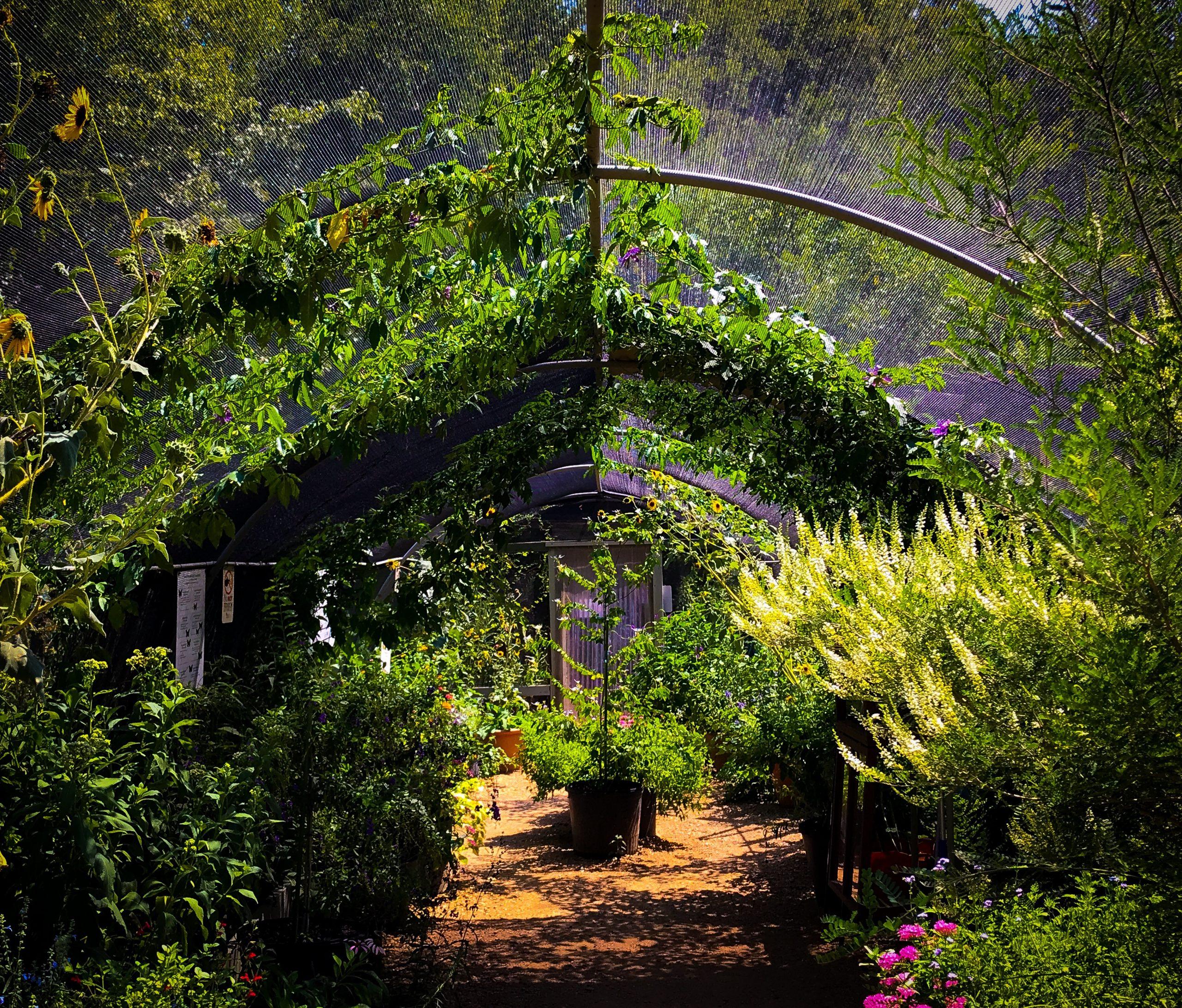 heard museum butterfly garden