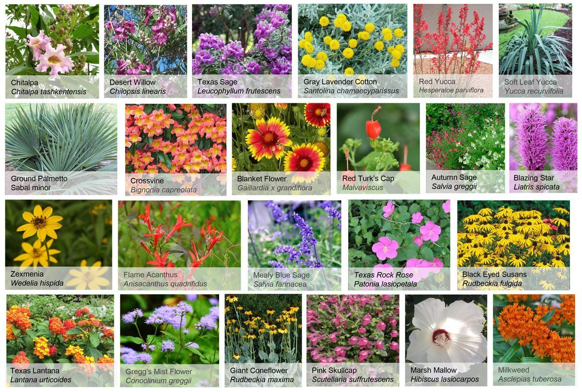 Some of the pollinator plants selected for the garden